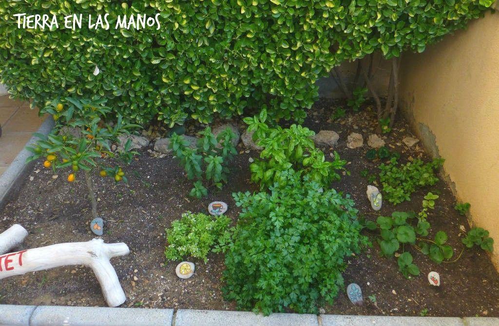 jardín de aromáticas niños 2