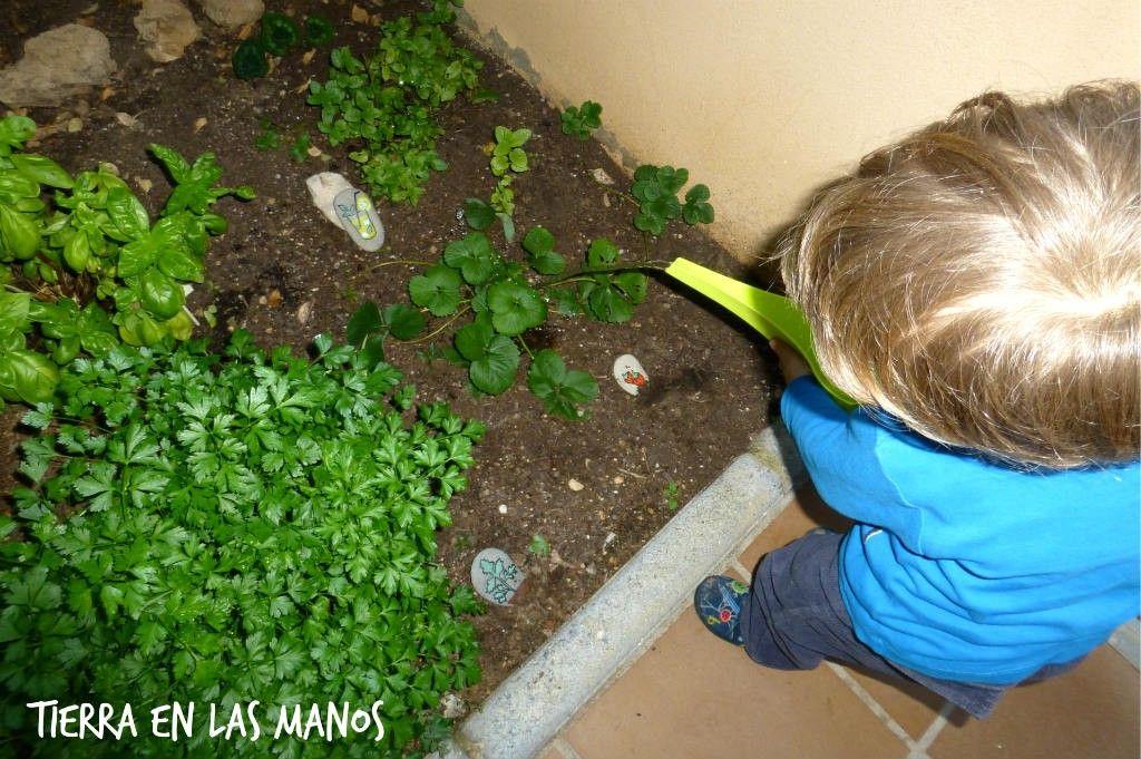 cuidar jardín plantas aromáticas