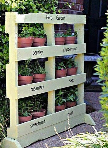 plantas aromáticas palet