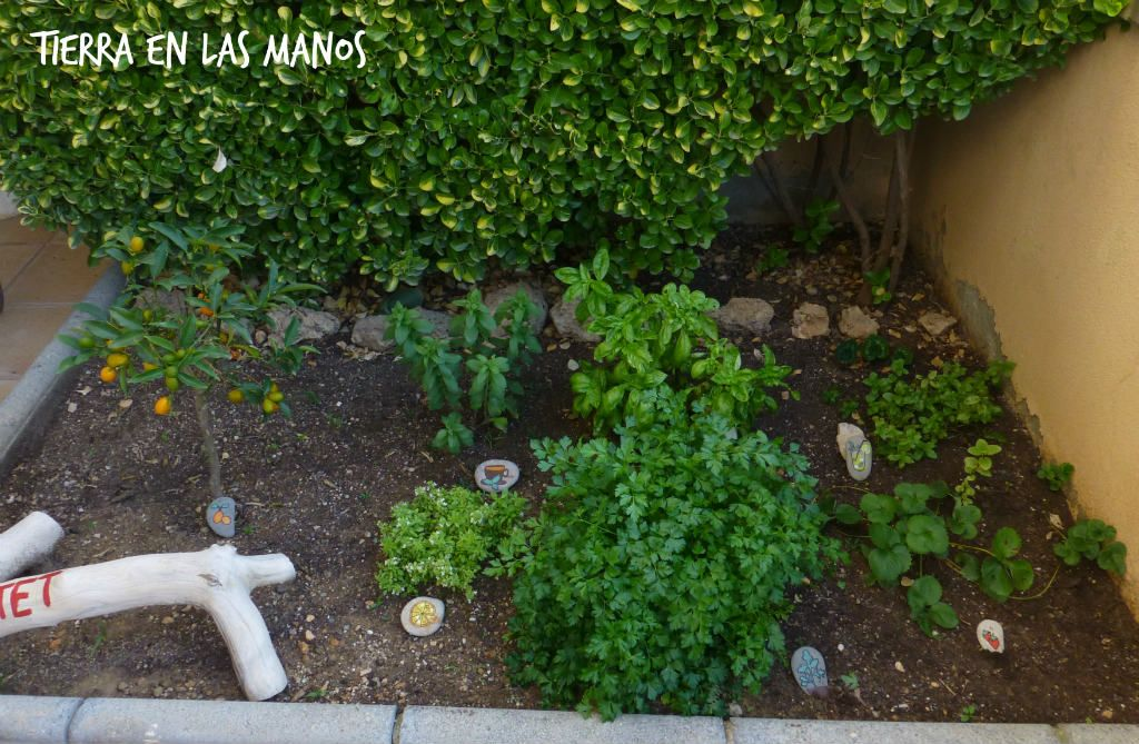 jardín de aromáticas niños